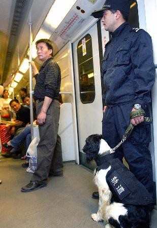 图文:中国公安首支地铁警犬队伍在上海成立(2)