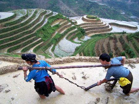 图文:广西高山瑶寨开始插秧(4)