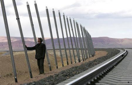 图文:青藏铁路风火山段铁路边的导热棒