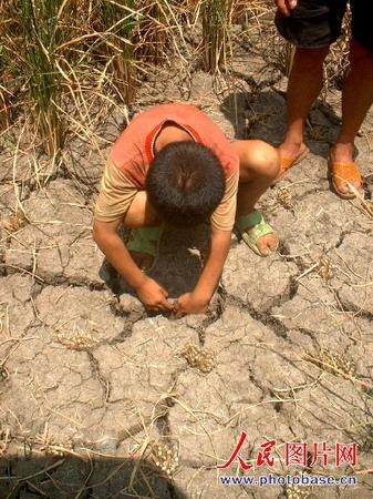 组图:贵州遵义遭遇25年未遇特大旱灾