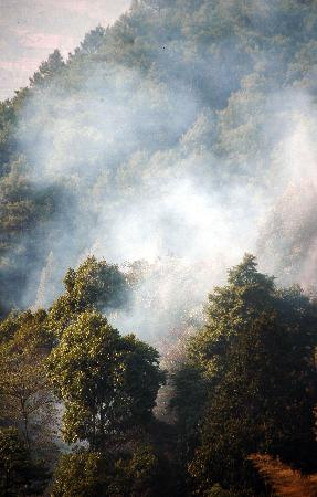 组图:重庆大足森林火灾得到控制