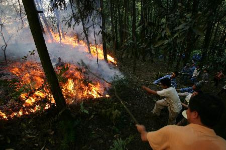图文:重庆北碚区发生森林火灾干部群众在灭火