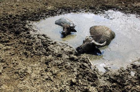 图文:贵州省贵阳市干旱少雨旱情严峻