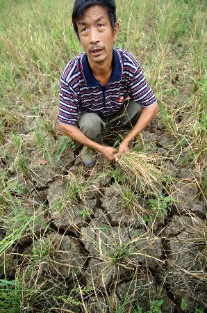 图文:村民黄右方家里的3亩水田绝收