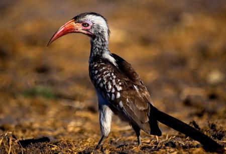 图文:动物.博茨瓦纳乔贝