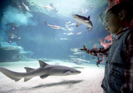 图文:(晚报)北京海洋馆鲨鱼码头落成