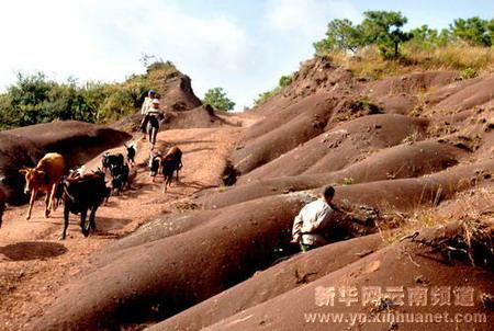 组图:云南禄丰抢救发掘14条恐龙化石