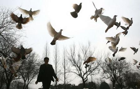 想着那时的风景就为那时的风景写诗 用这些诗喂养幼小的鸽   鸽群铺天