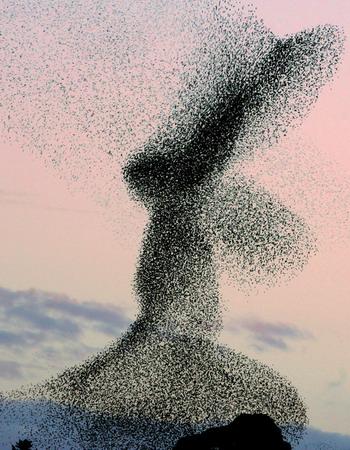 图文:华赛自然环保单幅优秀奖入围作品椋鸟群