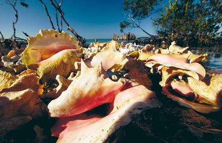 图文:伯利兹的红树林美景