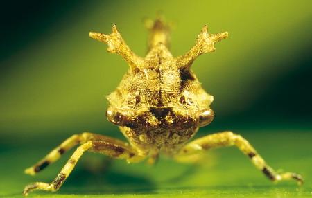 图文:有趣的委内瑞拉丛林中昆虫