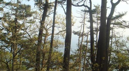 图文:韩国釜山著名风景区太宗台秀美的树木