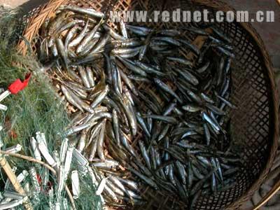 渔网头发图解步骤