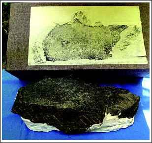 物的重大发现.记者张波摄-玄奘真迹 佛足印 表文残石首次披露图片