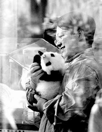 大熊猫 种群/图二图三