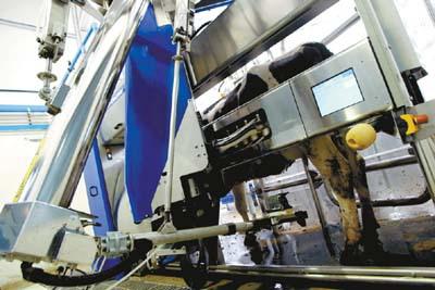 上岗机器人挤奶(图)视频游面对面图片