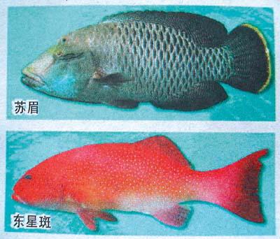 瓜子鱼手工制作图片