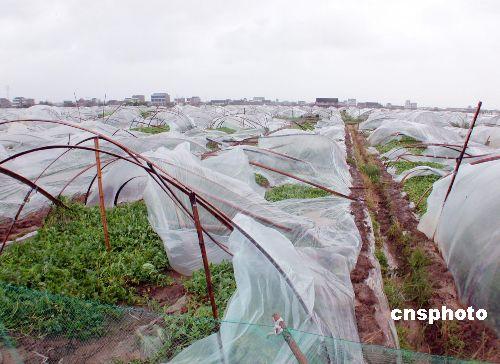 图文:海棠过后浙江万亩瓜棚受损失