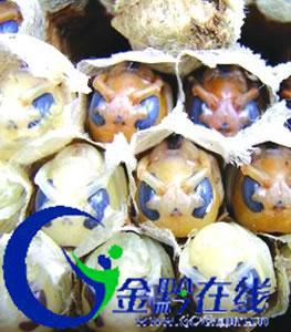 蜂蛹也美味贵阳野生蜂蛹每公斤售价达60元(图)