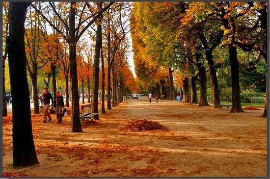 壁纸 风景 森林 树 桌面 桦林 桦树 550_365