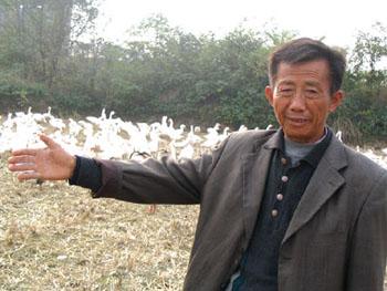 揭秘安徽禽流感报告人:为江苏高邮普通鹅农(图)