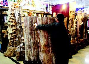 乌鲁木齐硅化木当街叫卖法律滞后保护不力