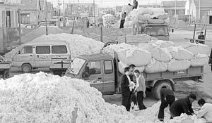 无棣:棉花堆成山