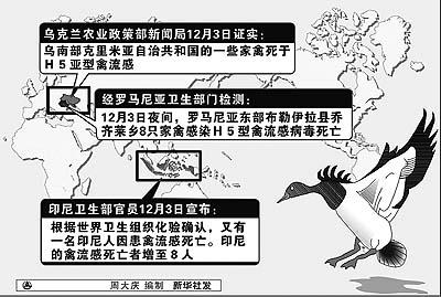 图文:乌克兰罗马尼亚印尼禽流感疫情
