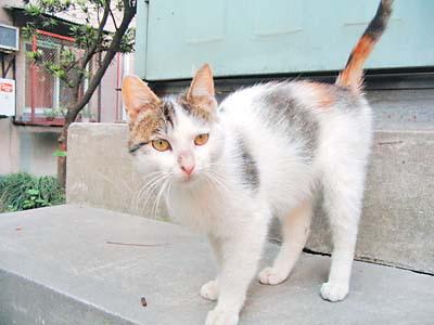 壁纸 动物 狗 狗狗 猫 猫咪 小猫 桌面 400_300