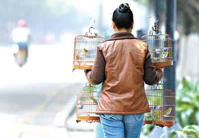 广州人 遛鸟 手绘