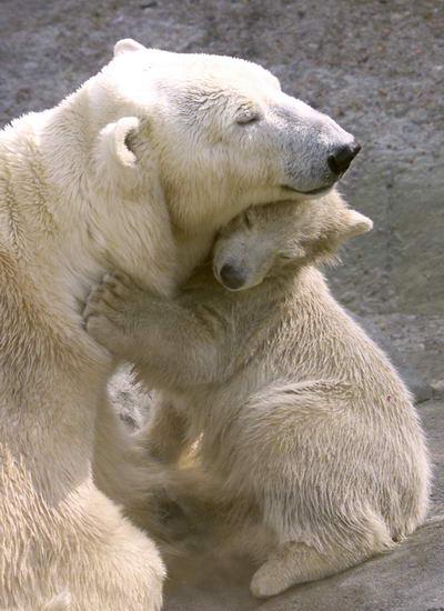 """小北极熊:""""妈妈,我爱你!"""