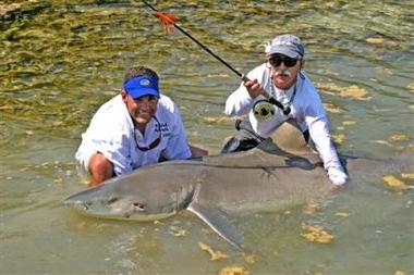 美国男子钓上近400磅重大柠檬鲨(图)