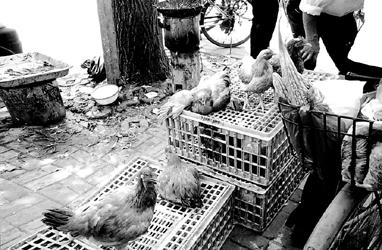 当街卖活禽