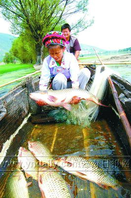 洱海开湖渔民丰收