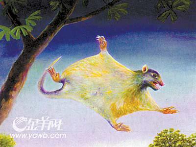 """综合 > 正文     中国古生物学家发现""""远古翔兽"""",哺乳动物飞行历史"""