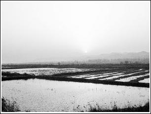 """湿地保护与放淤之""""争""""(图)"""