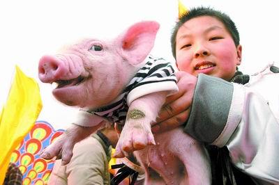 """穿着黑白相间的短袖,背着印有""""福""""字的红色小包,精心装扮的小白猪被抱"""