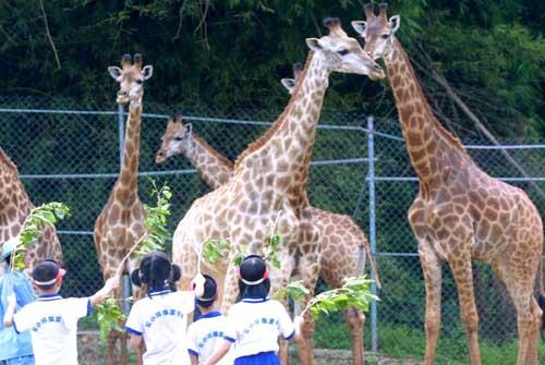 图文:重庆野生动物世界开放非洲原野