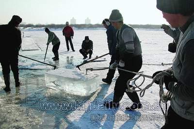 作冰灯而进行的采冰活动在松花江冰面上正式开始.-寒冬采冰人
