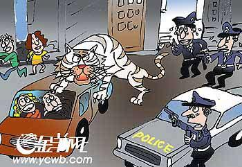 笼子里的老虎卡通