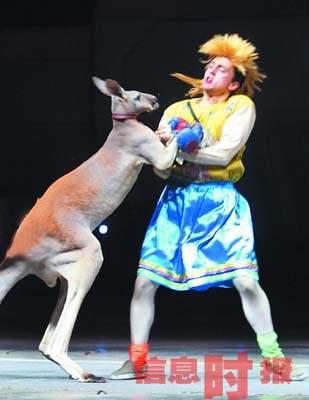 """图文:广州一动物园用袋鼠当""""拳王""""和人对打"""