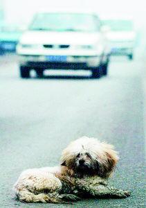 市区办证禽不养狗需要养家(图)家福柏家具图片