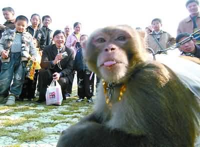 """动物园有关负责人告诉记者,使用""""认养""""这个词汇,是希望人类和动物能"""