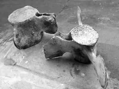 进行海洋捕捞作业时从海底捞得了一些巨型动物的骨头