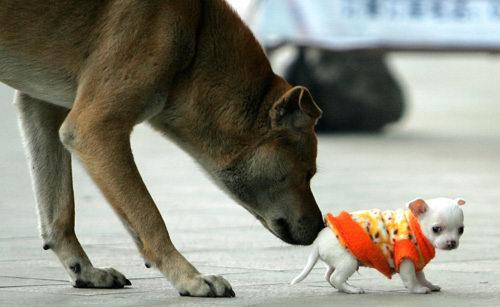 图文 街头的狗