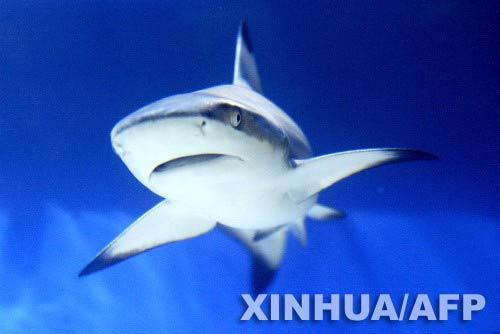 土耳其国际动物展的精灵大鲨鱼