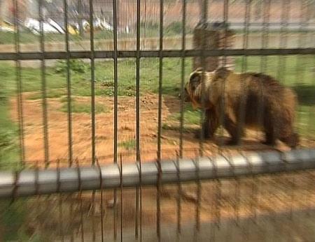 动物园老虎咬死男孩续:安全措施未到位酿成惨剧