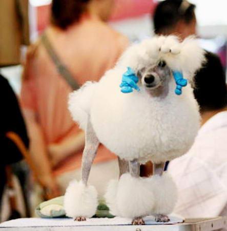 组图:国际宠物展时尚小狗吸引近万名观众