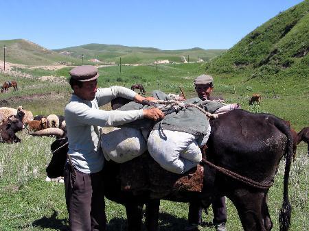 图文:〔社会广角〕(2)新疆牧民转场忙