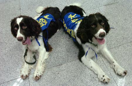 组图:检疫犬福州机场正式上岗